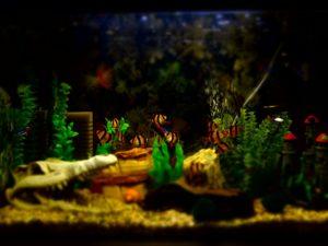 plante dans aquarium
